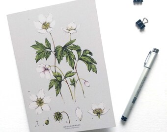 A5 Notebook - Wood Anemone
