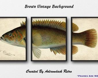 Bergall Print Set - Set of 3 Giclee Fish Prints - Fish Wall Art - Fisherman Gift - Rustic Lodge Decor - Fish Triptych Poster - Fish Decor
