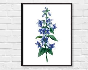 Floral Print / Botanical Print / Floral Clipart / Vintage Flower Illustration Print / DIY / Bluebell Print / Floral Print / Art Print [33]