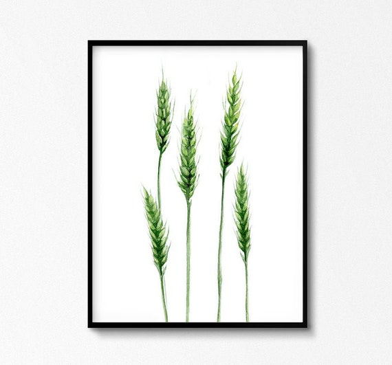 Wheat Plant Art, Grain Watercolor Illustration, Bunch Poster, Rural Botanical Prints, Kitchen Cozy Decor, Agricultural Plants, Green artwork