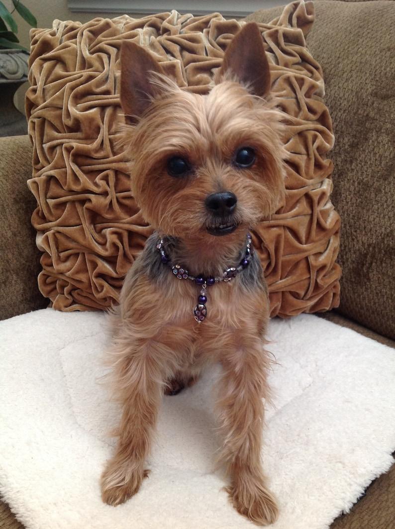 Stylish Pet Collar Luxury Dog Collar Necklace Polka Dot Purple Pet Jewelry  Custom Pet Collar Designer Dog Cat Collar Fancy Pet Accessories