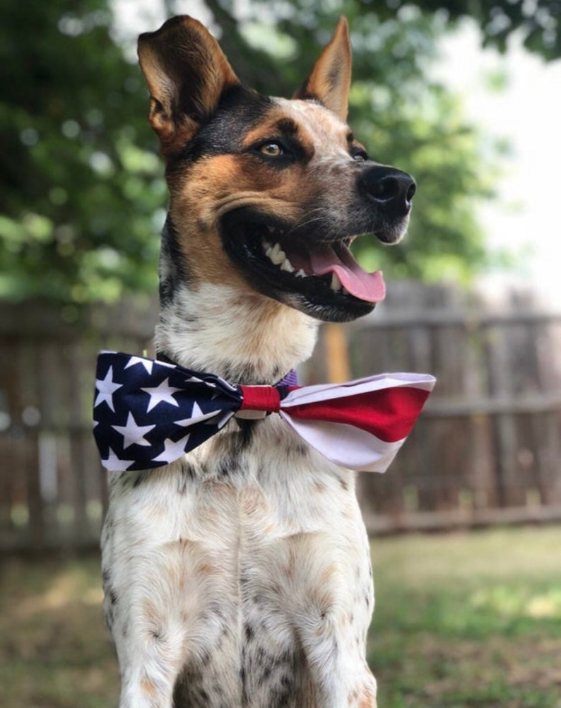 Large Dog Bow Tie Patriotic Bow Tie slip on bow tie American Flag Dog Bow Tie Huge Bow tie hook and loop Bow Tie