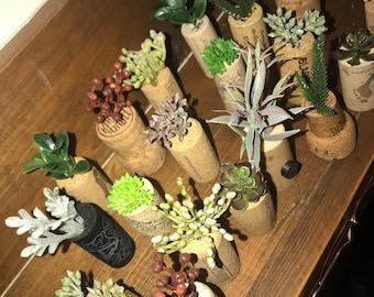 Set of Succulent Cork Magnets