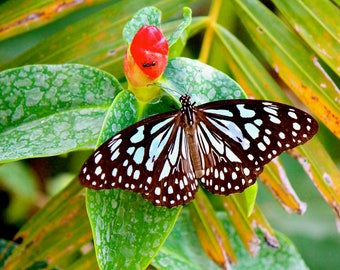 Butterfly Photos Blank Greeting Photo Cards Garden Love Freedom Exotic Butterflies Gift for Her Him Summer Garden Traveler Retirement Cards