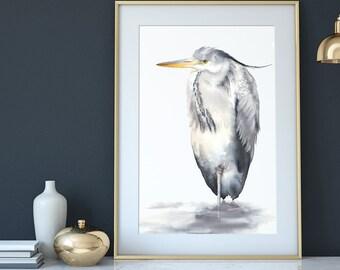 Grey heron, A3+ size, watercolour print, Australian, wildlife, bird wall art, watercolor print