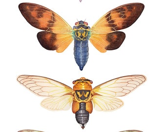 Cicada, A4 size, watercolor print, insect wall art, cicadas watercolour