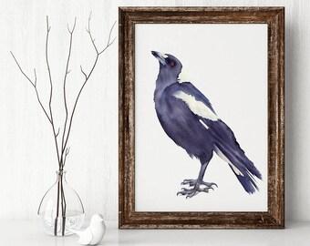 Magpie, A3+ size, watercolour print, Australian wildlife, bird wall art, watercolor print, magpie art
