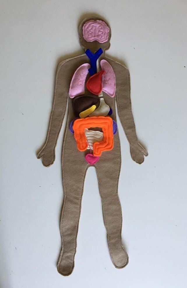 Menschliche Anatomie Filz Set Filz menschlichen Organe Filz | Etsy