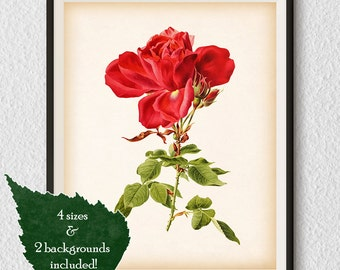 Rose Art Botanical Print Vintage Rose Wall Art Rose Print Etsy
