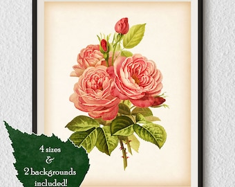 Rose art, Botanical print vintage, Rose wall art, Rose print, Antique botanical print, Rose illustration, Printable print, Digital print #16