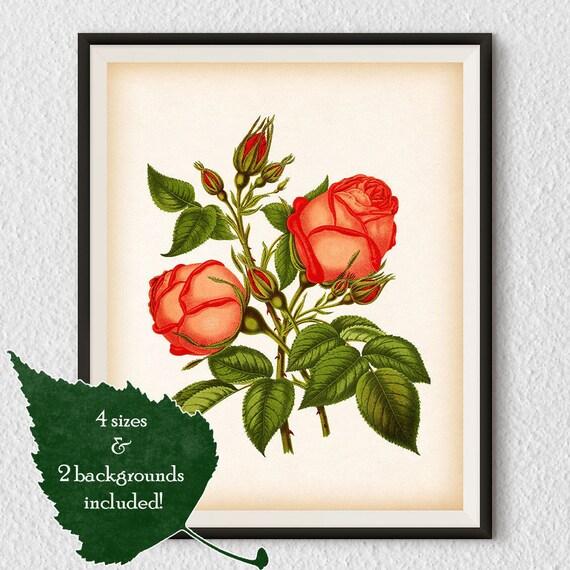 Instant Download Rose Print Vintage Rose Illustration Etsy