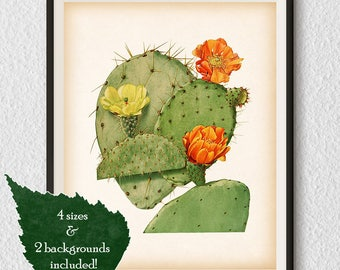 Botanical art, Vintage cactus print, 8x10 print, 11x14 print, A3, A4, Instant download, Printable wall art, Opuntia print, Wall decor, #85