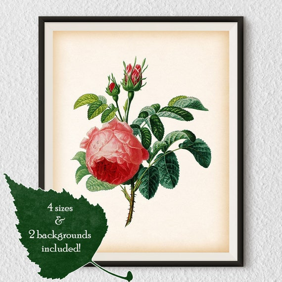 Pink and Green Antique Botanical Flower Print Size 8x10/""