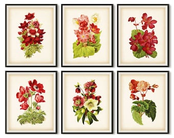 Botanical print, Set of 6 prints, Vintage botanical print set, Botanical printable art, Instant download, 8x10 print, 11x14 print, JPG