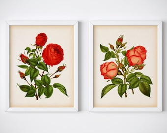 Vintage rose print set, Set of 2 rose prints, Rose art, Instant download rose print, Rose wall art, Home wall art, Rose printable, Digital