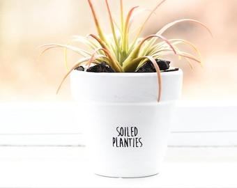 Soiled Planties | Plant Pot