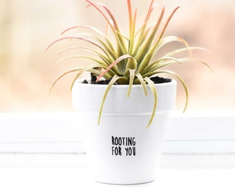 Rooting for You | Plant Pot
