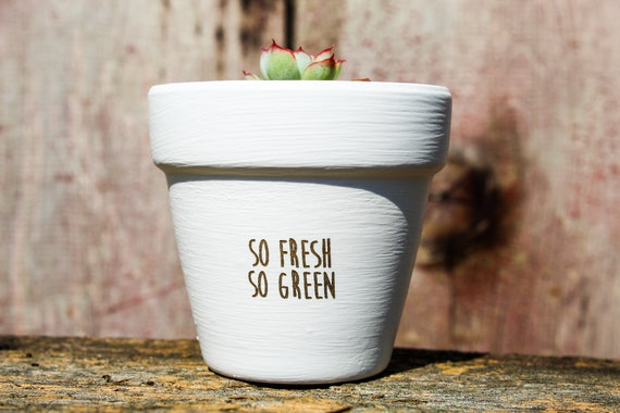 So Fresh So Green Succulent Pot