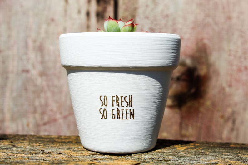 So Fresh So Green Succulent Pot image 0