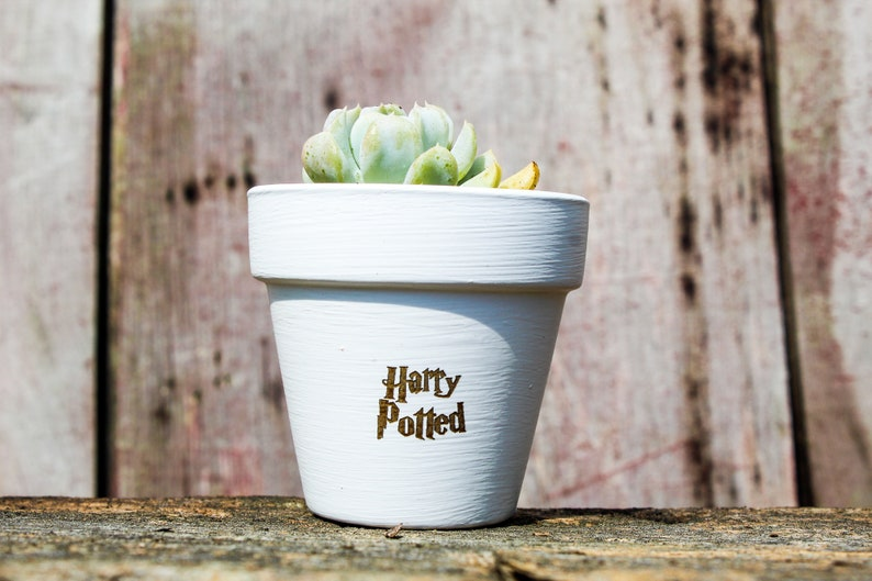 Harry Potted Succulent Pot image 0