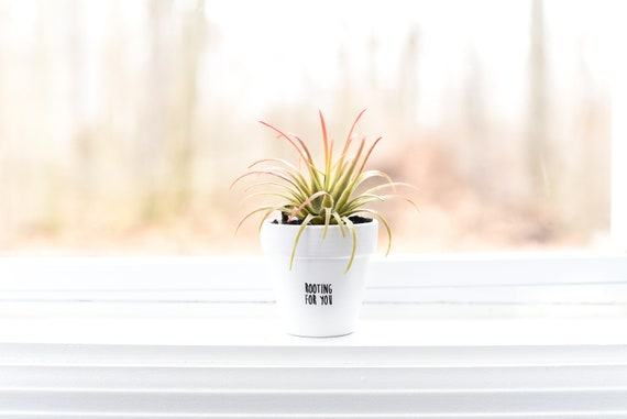 Rooting for You   Plant Pot