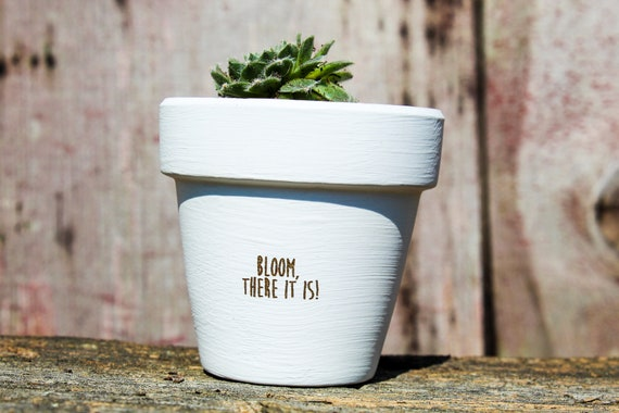 Bloom, There It Is Succulent Pot