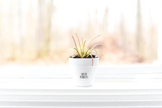 Soiled Planties   Plant Pot