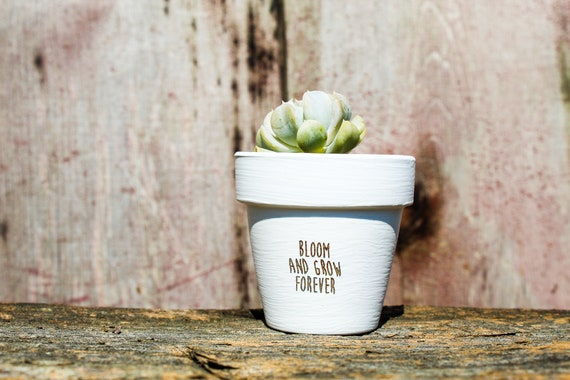 Bloom and Grow Forever Succulent Pot