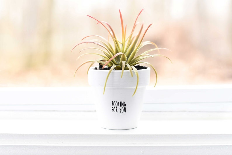 Rooting for You  Plant Pot image 1