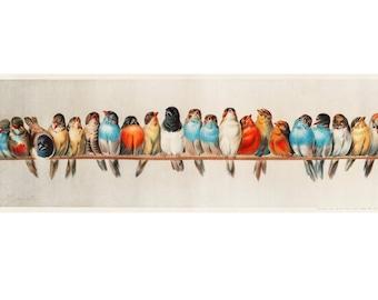 Songbirds art print, A Perch of Birds by Hector Giacomelli, Bird lover gift, Birdwatcher gift, Cute bird painting, Vintage bird wall art