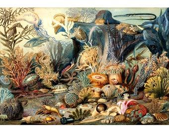 Antique ocean life art print, Sea life art print, Marine life art print, Coral reef, Ocean floor, Underwater scene, Antique natural history