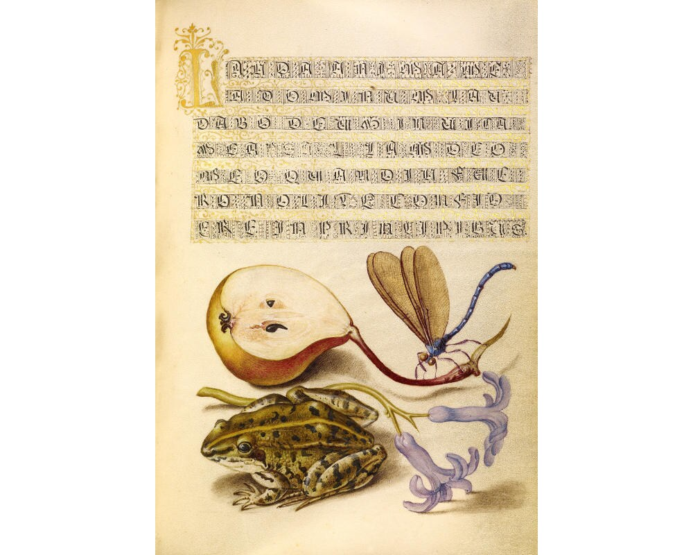 Toad art print Frog art print Antique botanical art Antique   Etsy