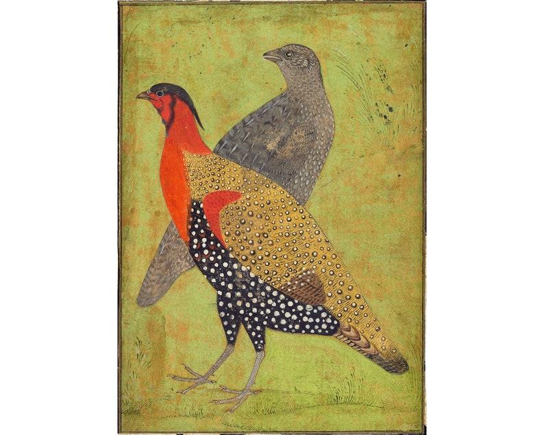 Antique Indian bird art print, Two pheasants, Mughal painting, Exotic birds  wall art, India art, Tragopan horned pheasant, Vintage animals