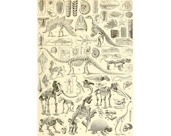 Dinosaur skeletons art print, Dinosaur bones, Vintage dinosaur art, Antique dinosaurs, Prehistoric animals, Fossils art, Archaeology art