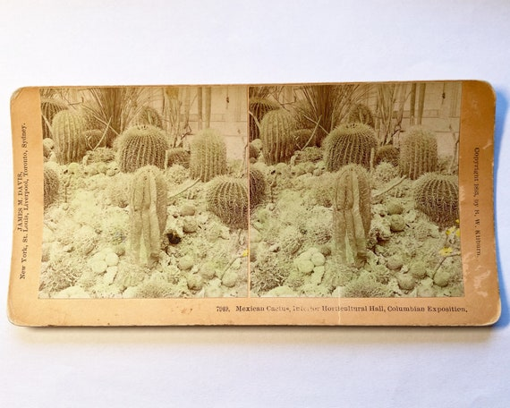 Antique B. W. Kilburn Stereoview - Mexican Cactus, Interim Horticulture Hall at the Chicago World's Fair Columbian Exposition