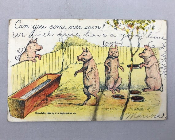 Antique Postcard - Comic Post Card - J. S. Ogilivie Publishing Co. - Undivided Back - Polite Pigs - Can You Come Over Soon