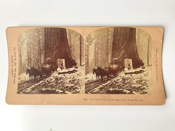 Antique B. W. Kilburn Stereoview - Sequoia Tunnel Tree, Yosemite, California - James M. Davis - Copyright 1899