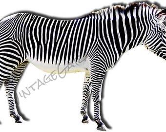 Zebra Animal Laser Cut Out Sign.