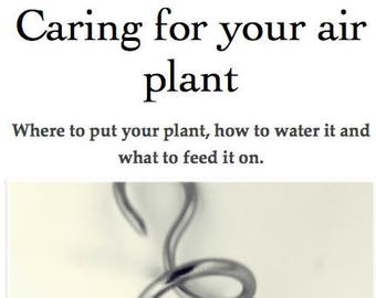 Caring for your air plant
