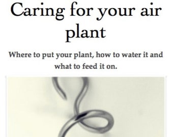 Download, Caring for your Airplant leaflet, tillandsia, how to, growing.