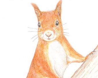 Red Squirrel - Birthday Card