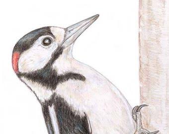 Woodpecker Blank Card