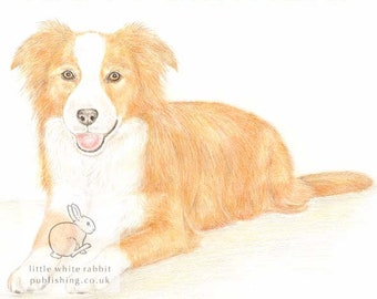 Amber the Border Collie - Birthday Card