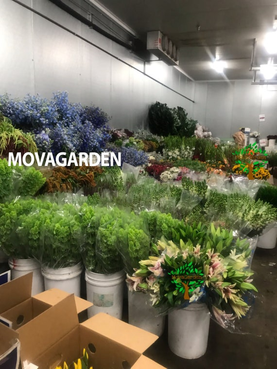 2.5 pounds Live Spanish Moss Fresh Spanish Moss by MovaGarden