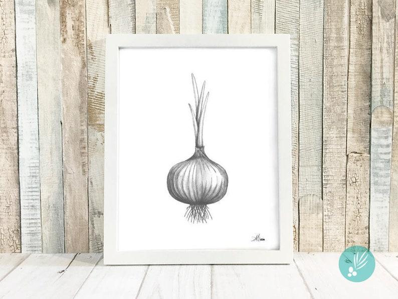Farmhouse Wall Decor for Kitchen Onion Print Kitchen Art image 0