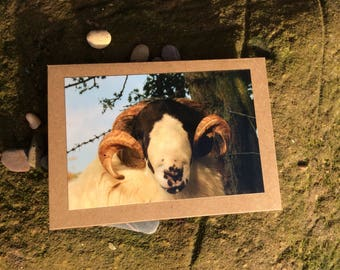 Horned sheep card,  Easter card, Mother's Day card, birthday card, Thankyou card, blank card, just to say card,