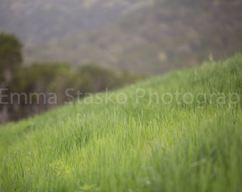 Grass Digital Background