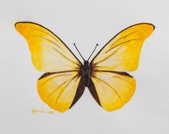 Stampa di acquarello da me realizzato, farfalla