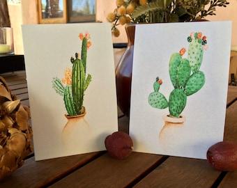 Cacti Medley!