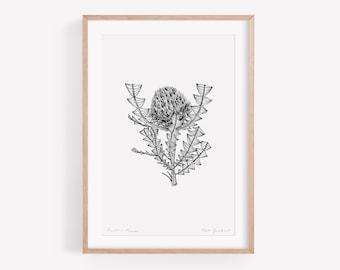Australian Flower Art Print of Banksia